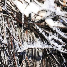 Salzkristalle im Gradierwerk